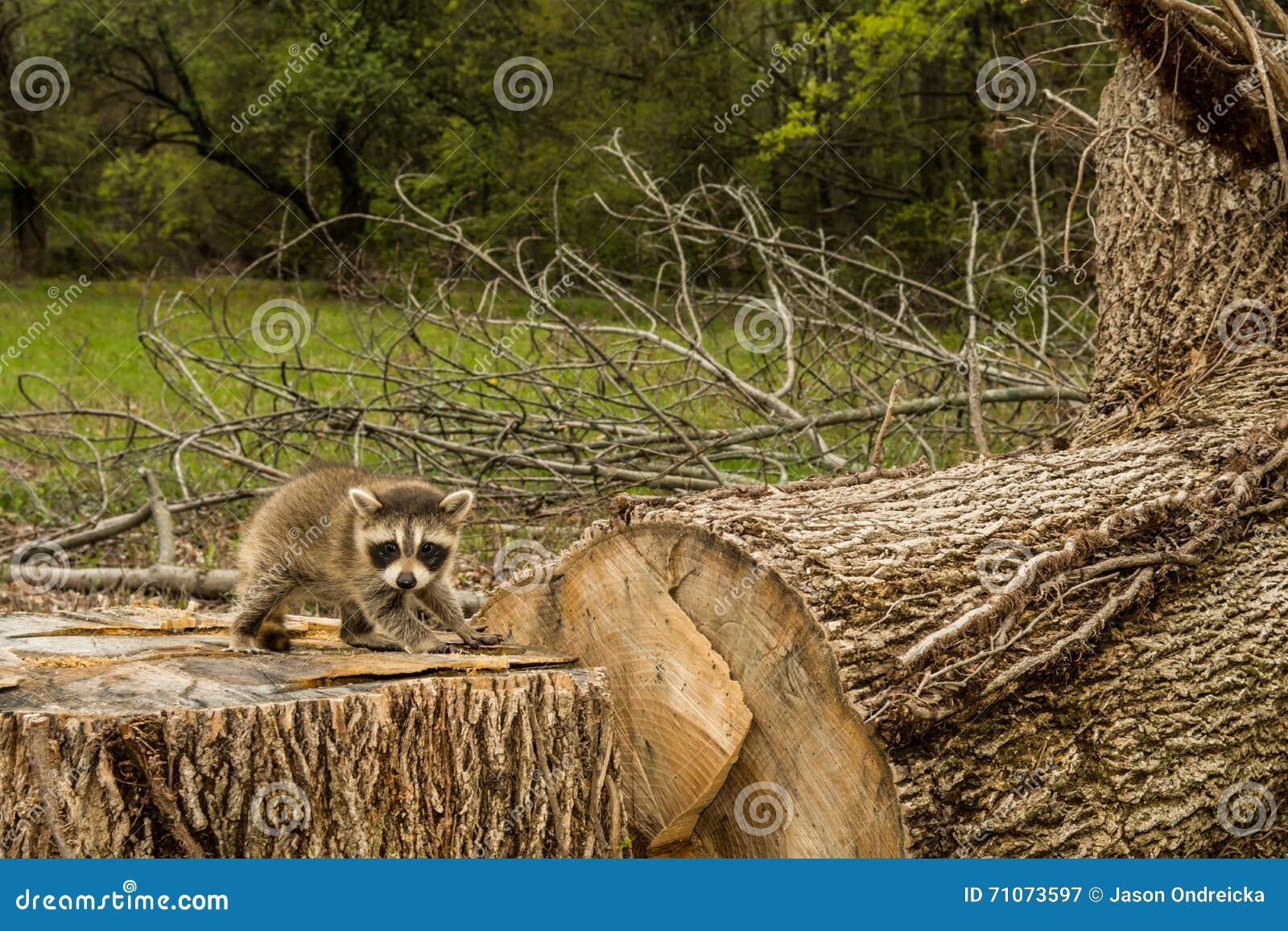 Negative Effects Of Deforestation Stock Photo - Image: 71073597