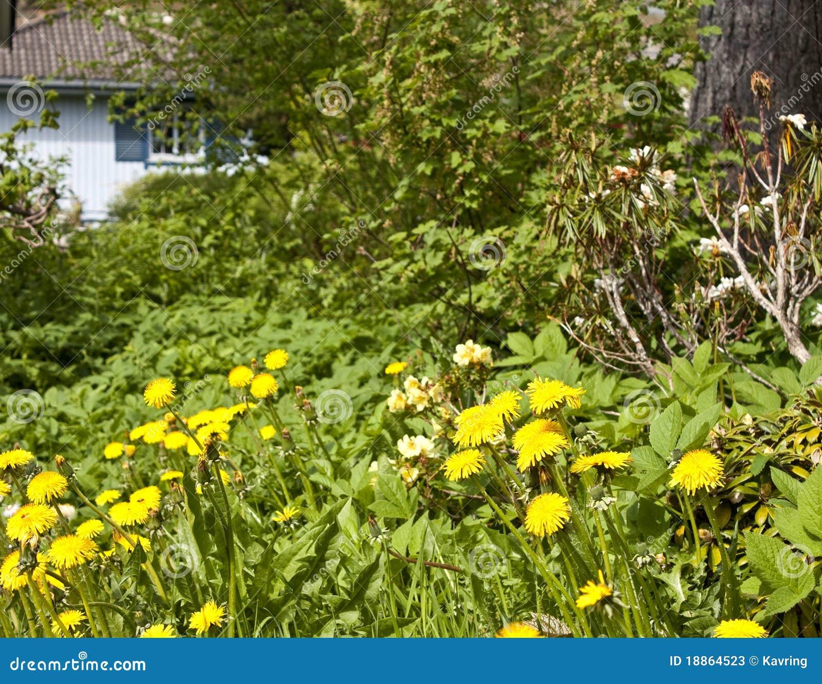 Neglected garden