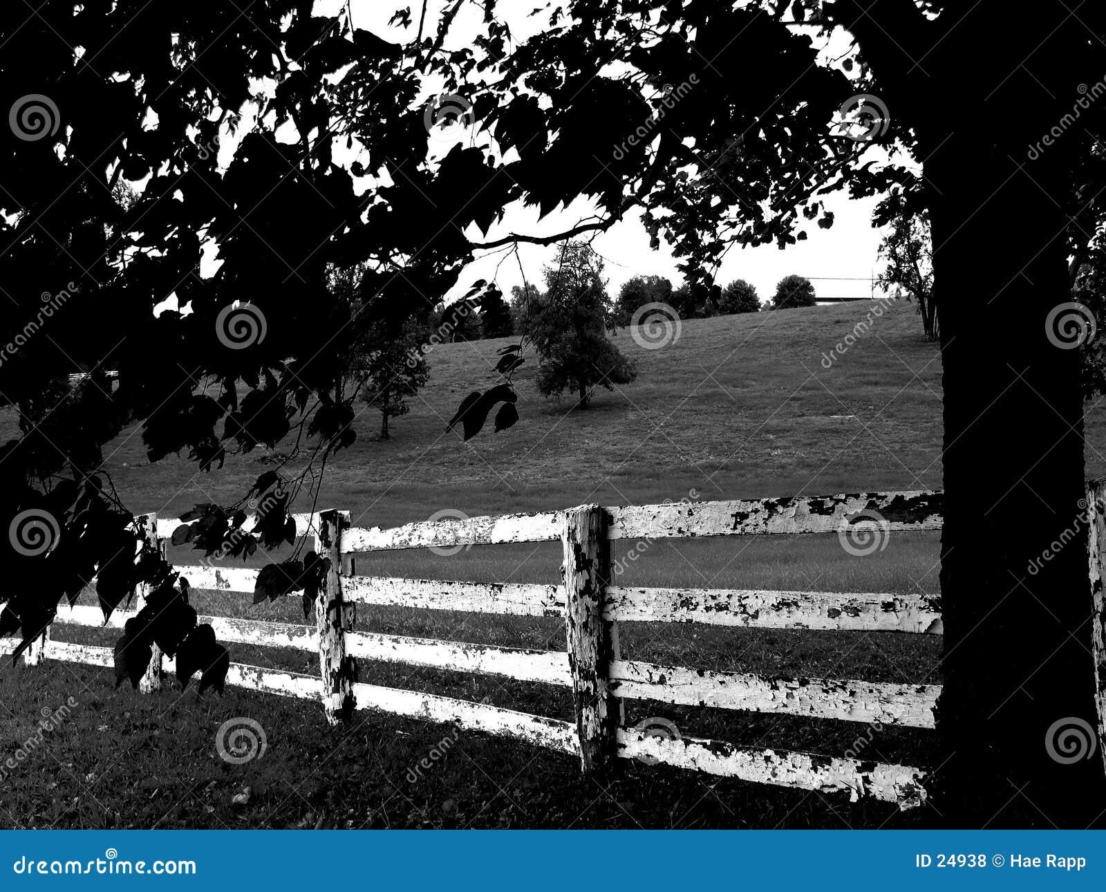 Negro y blanco de la cerca
