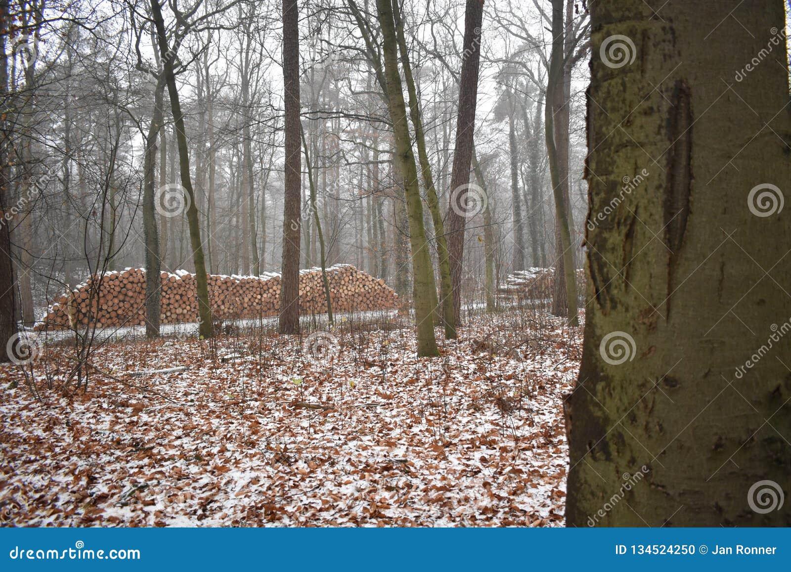 Neige dans la forêt