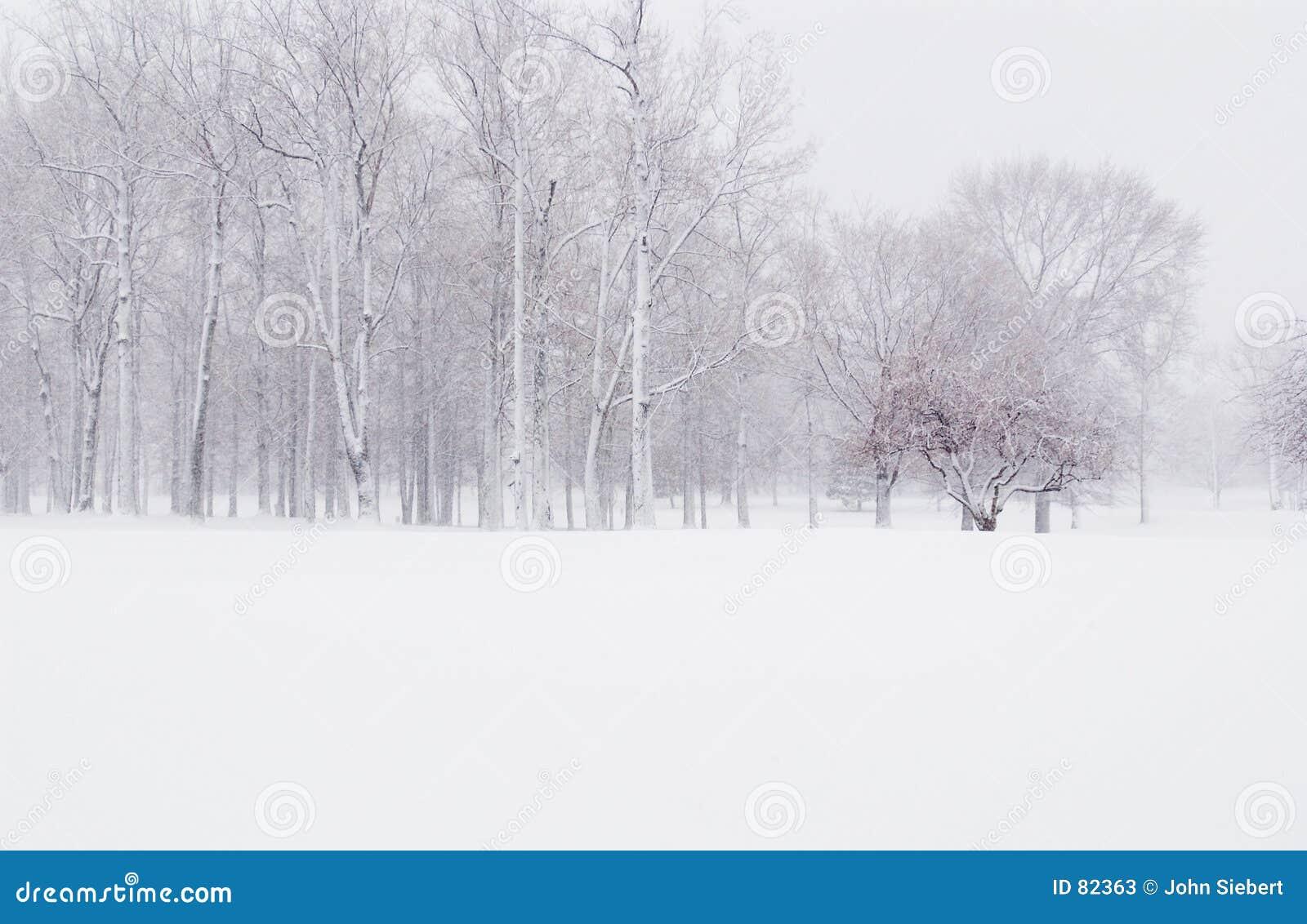 Neige de l hiver