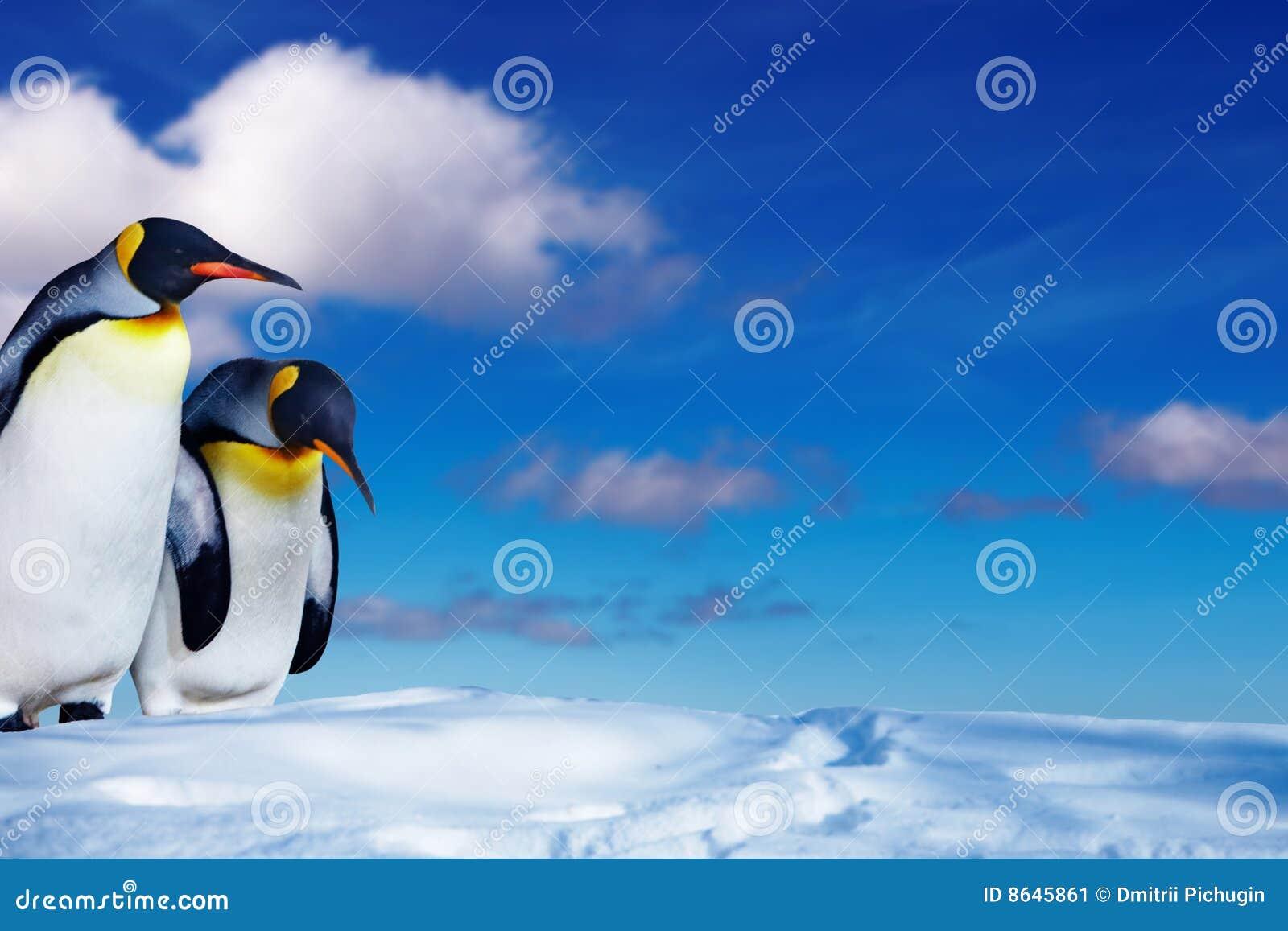 Neige deux de pingouins