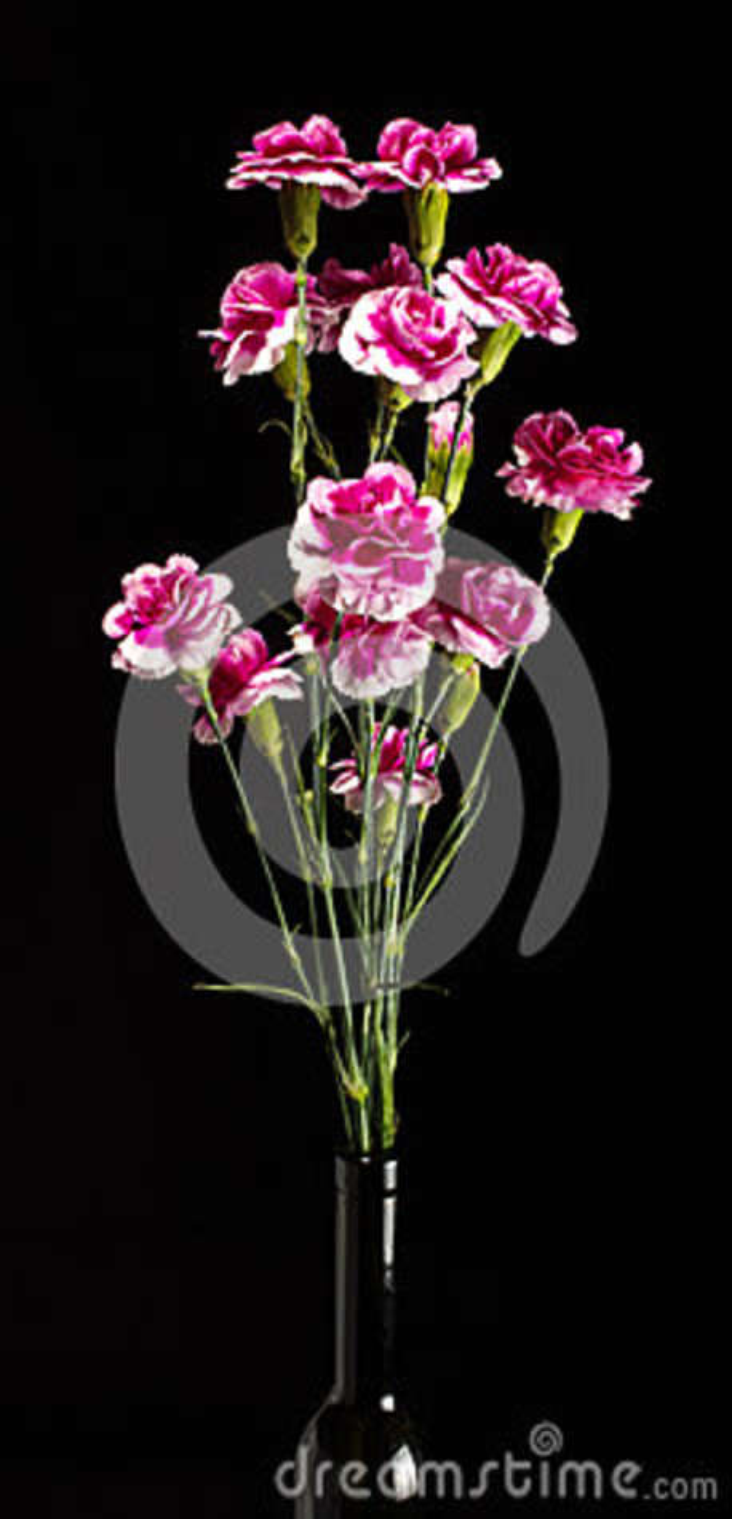 Nelkenrosa-Blumenblumenstrauß auf dem dunklen Hintergrund