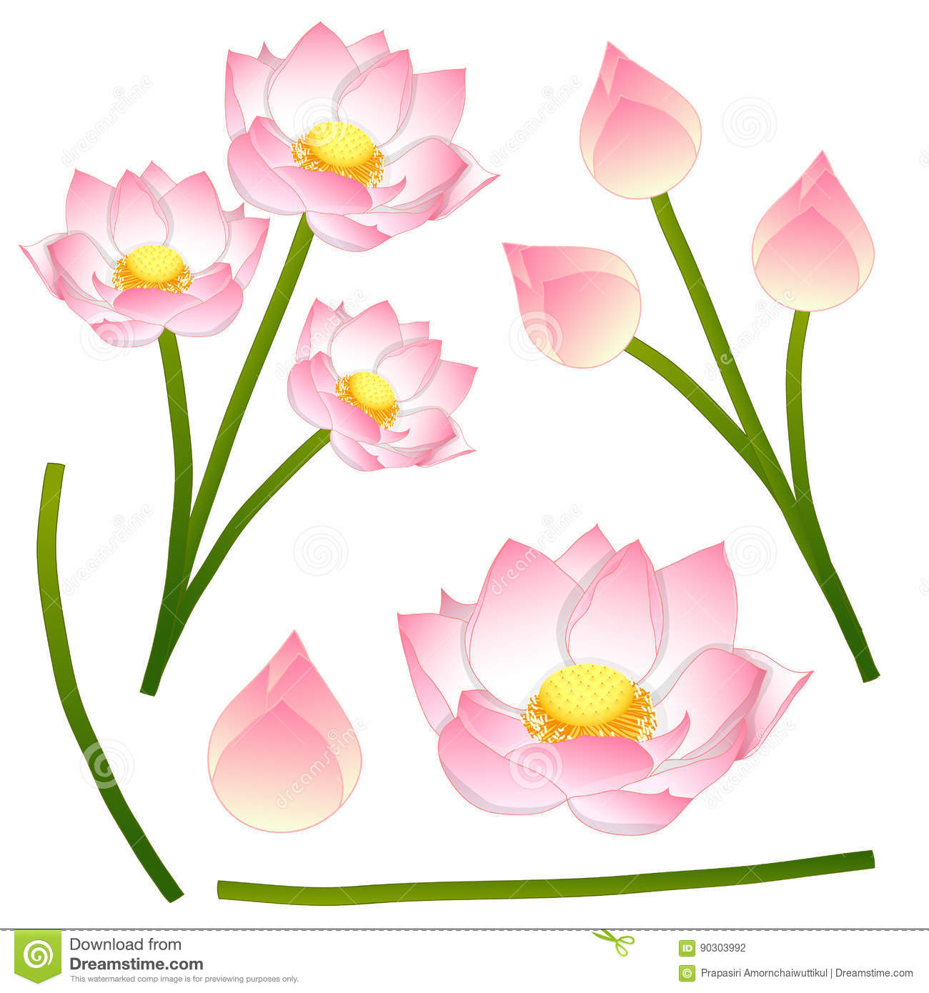 Nelumbo nucifera indian lotus sacred lotus bean of india nelumbo nucifera indian lotus sacred lotus bean of india egyptian bean izmirmasajfo