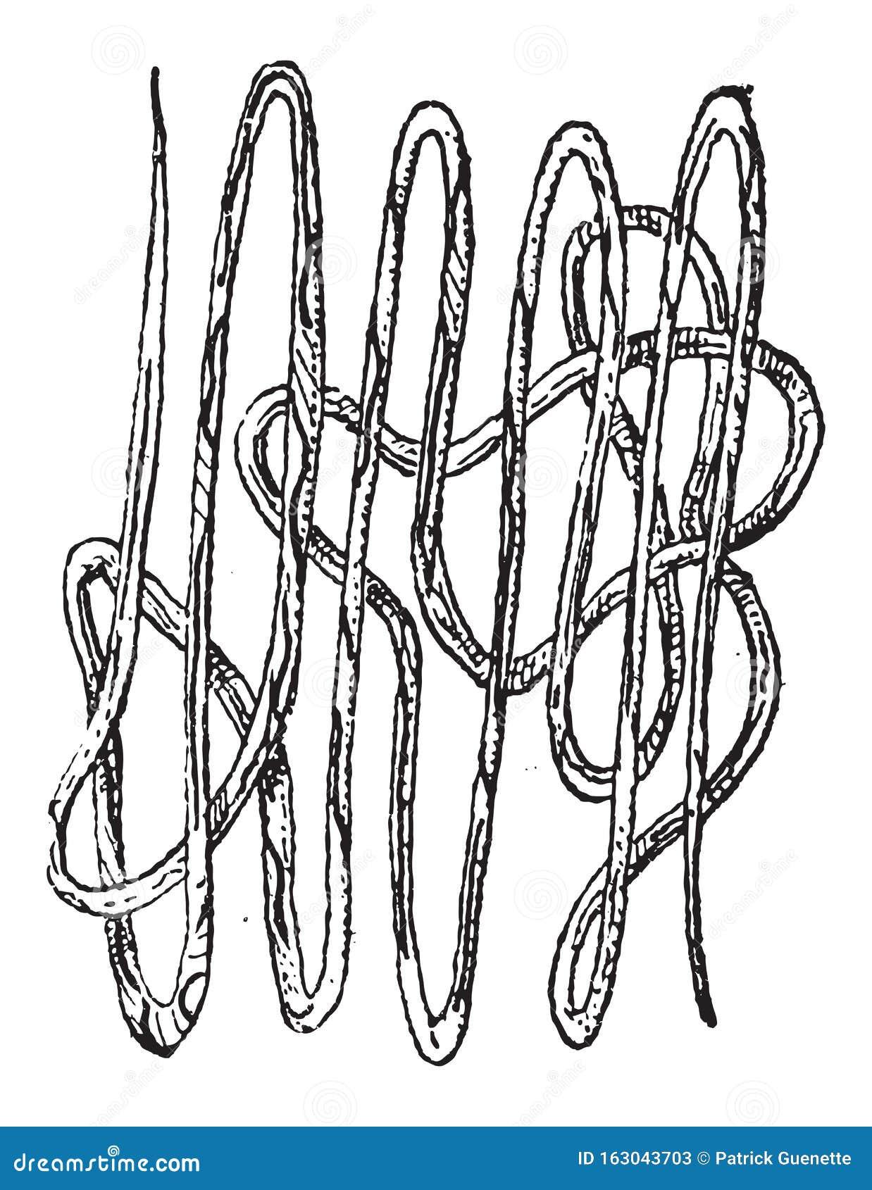 Nematodele sunt paraziți la om Nematod platyhelminthes și annelida. Platelminți