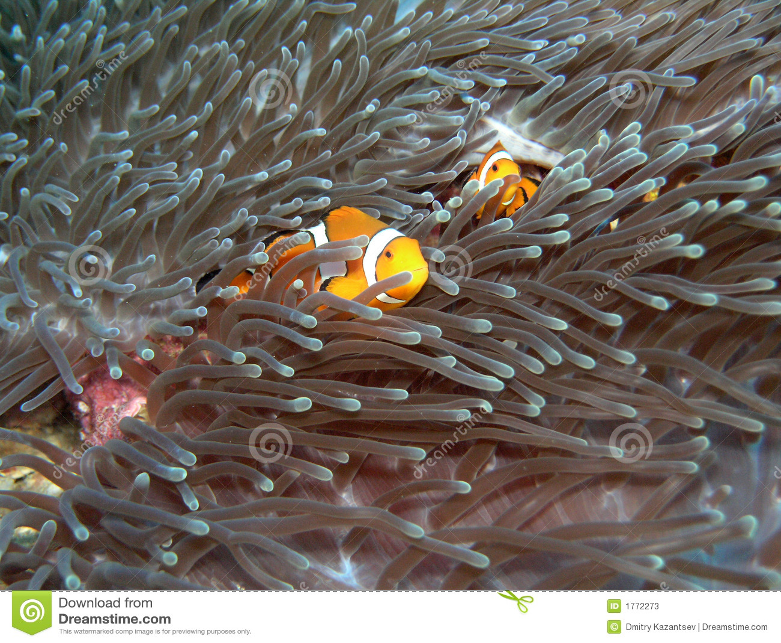 Nemo fish2