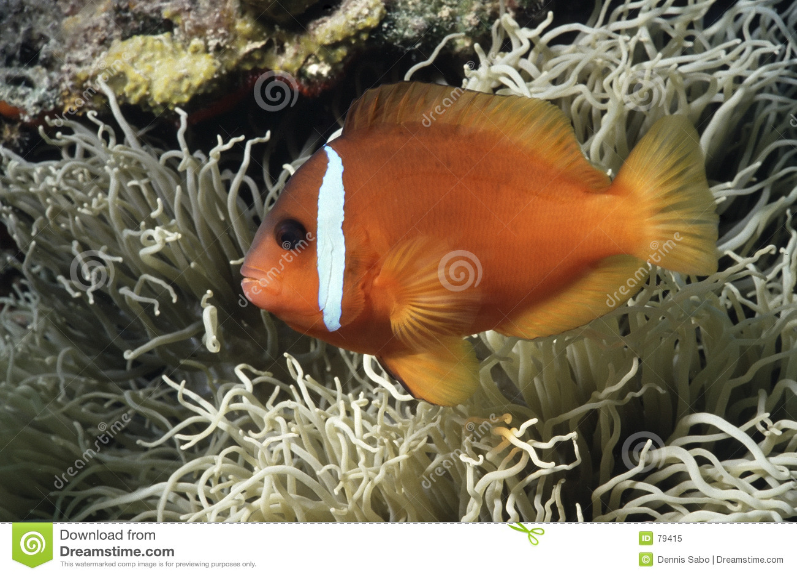 Nemo ustalenia