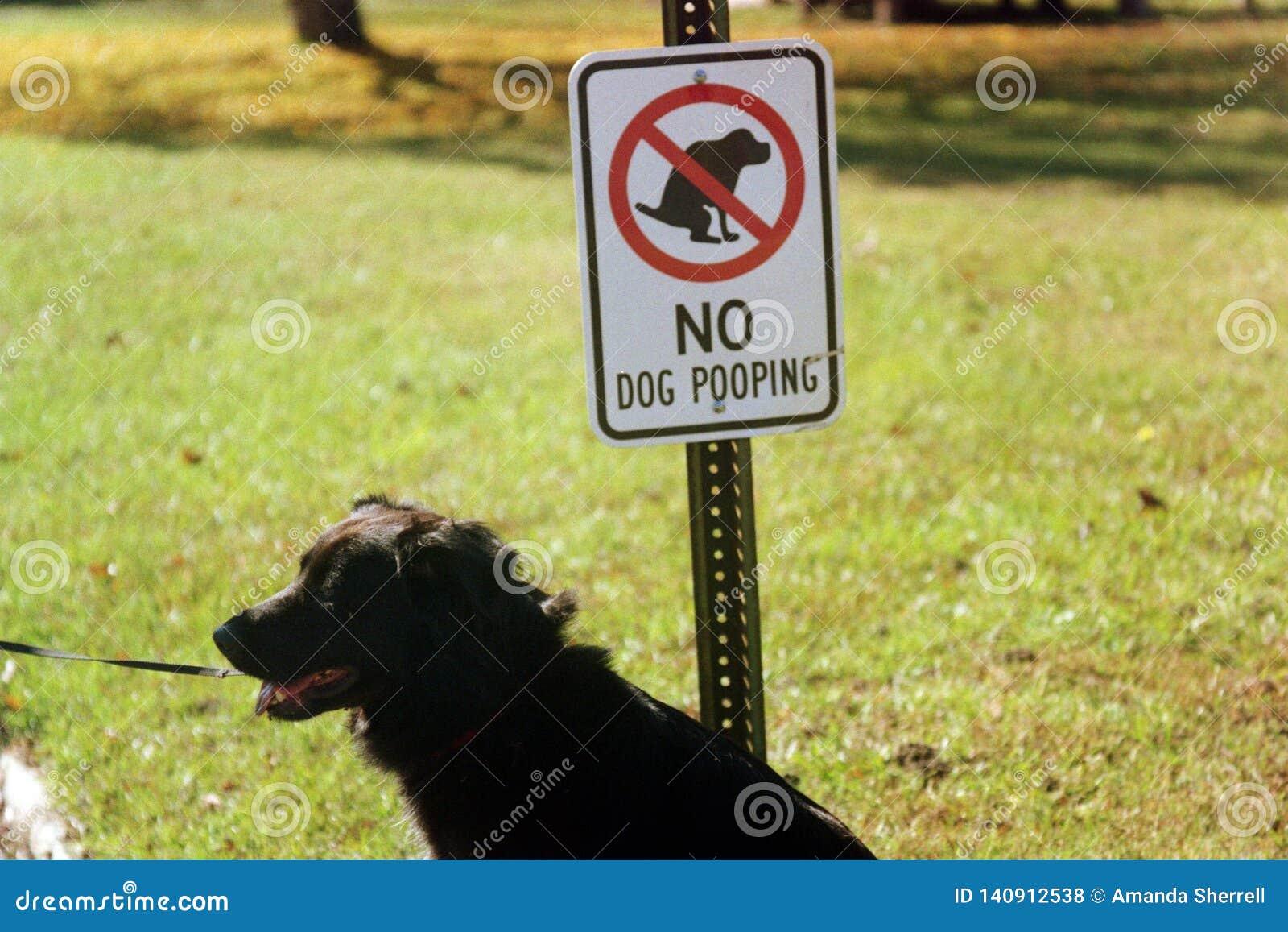 Nenhuns cães permitidos