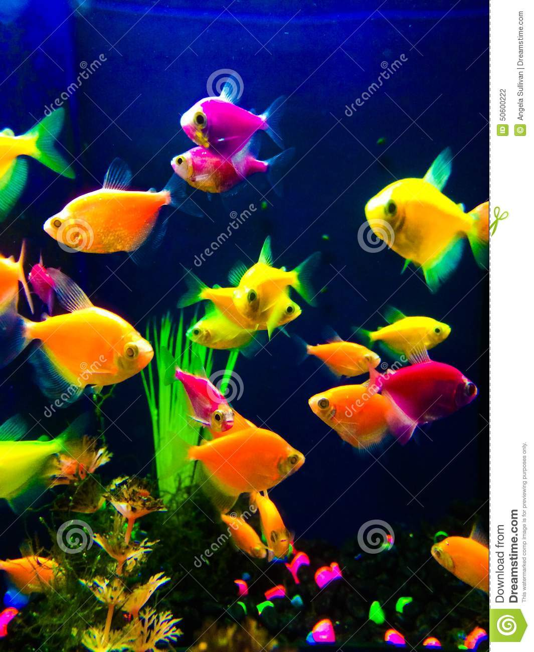 Neon colorful fish aquarium stock photo image 50600222 for Neon fish tank