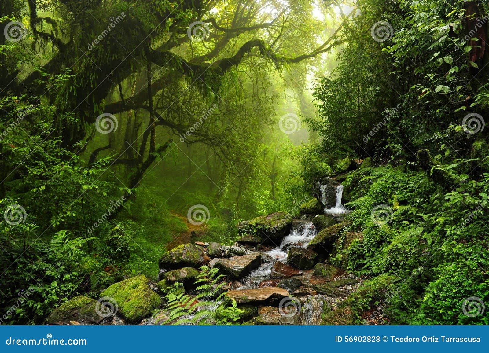 Nepal jungle