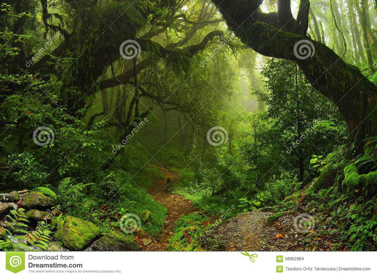 Nepal Jungle Stock Photo - Image: 56902984 Tropical Print Background