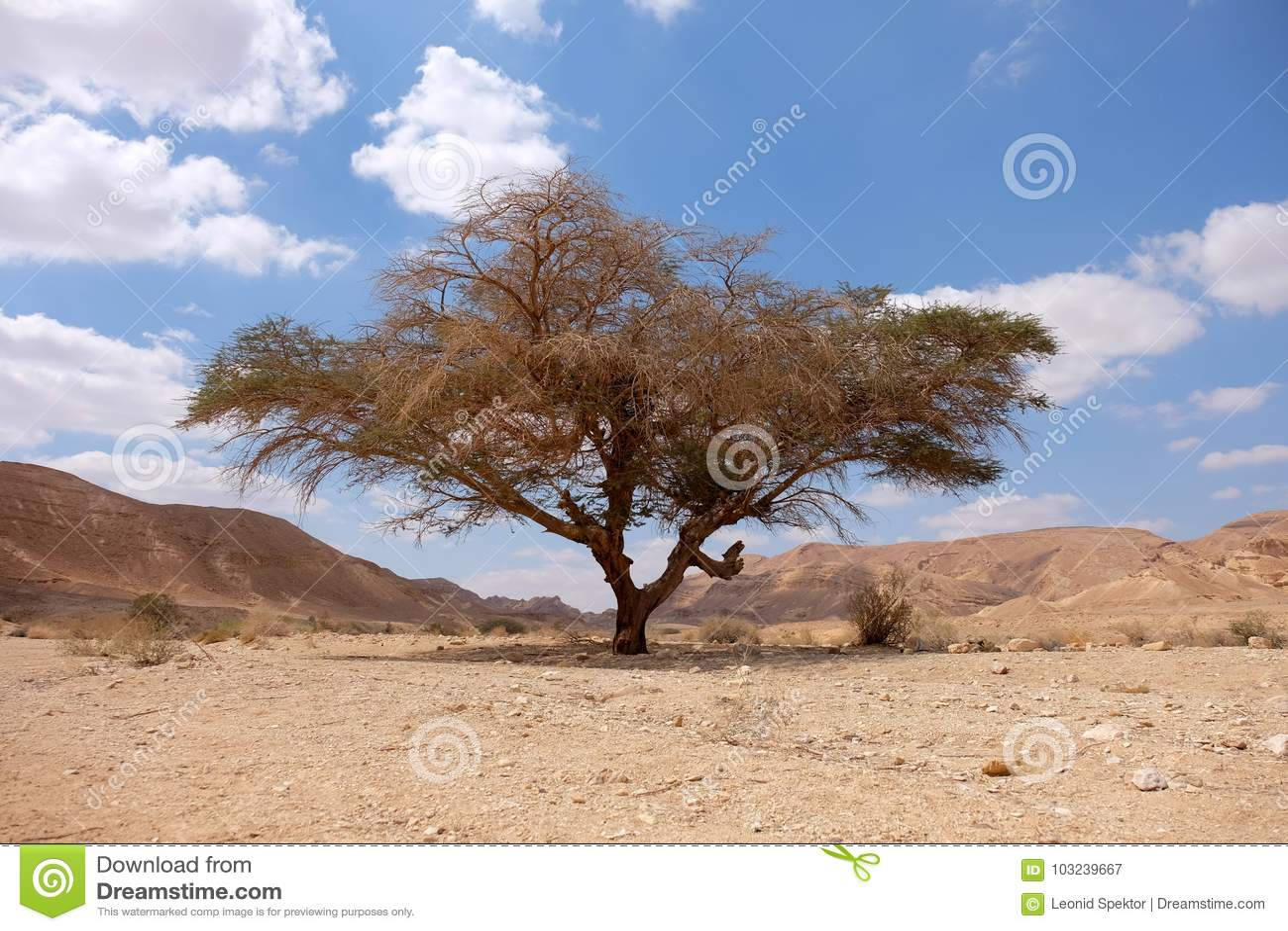Neqev沙漠风景