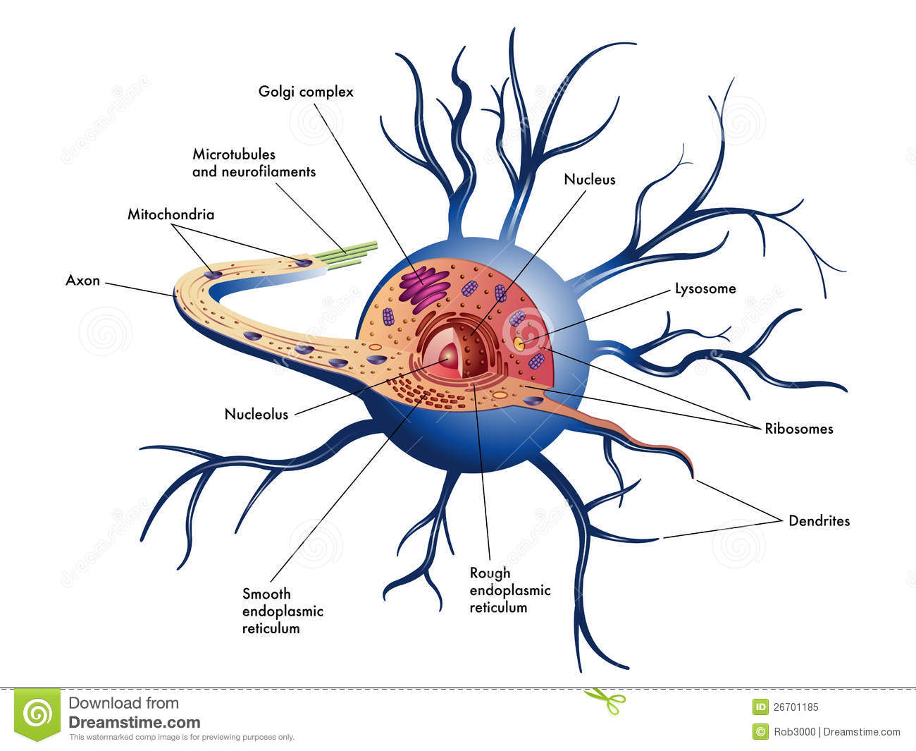 Nerve Cell Royalty Free Stock Photo - Image: 26701185