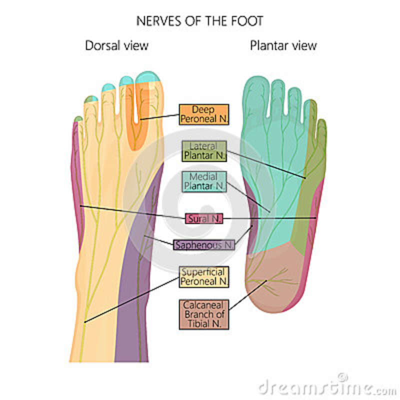Nerves of the foot stock vector. Illustration of pain - 80393089