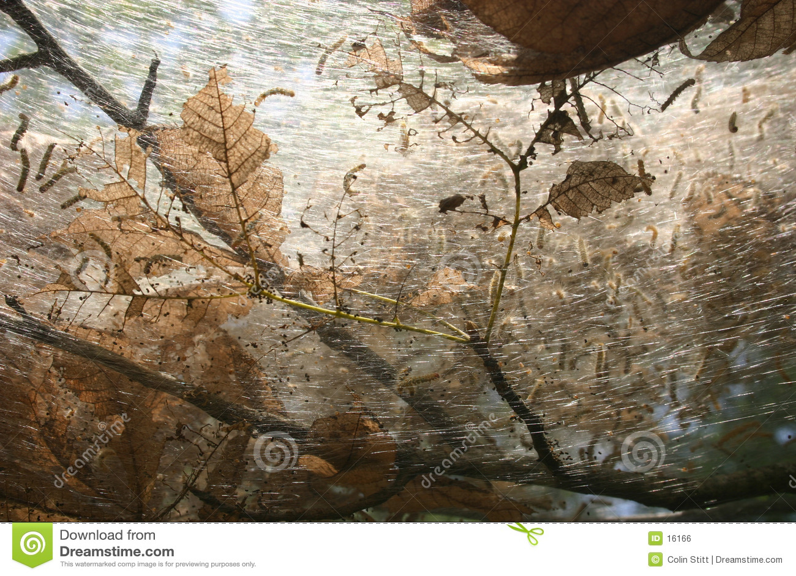 Nest der Endlosschraube
