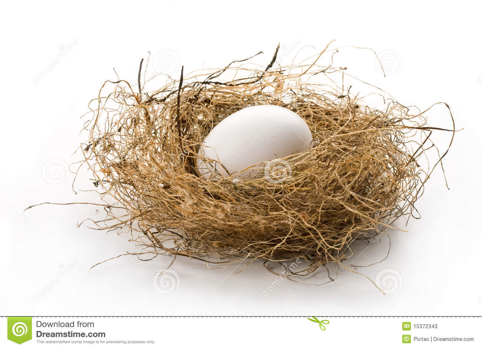 in the bird nest isolated on white. Concept of retirement nest egg ...