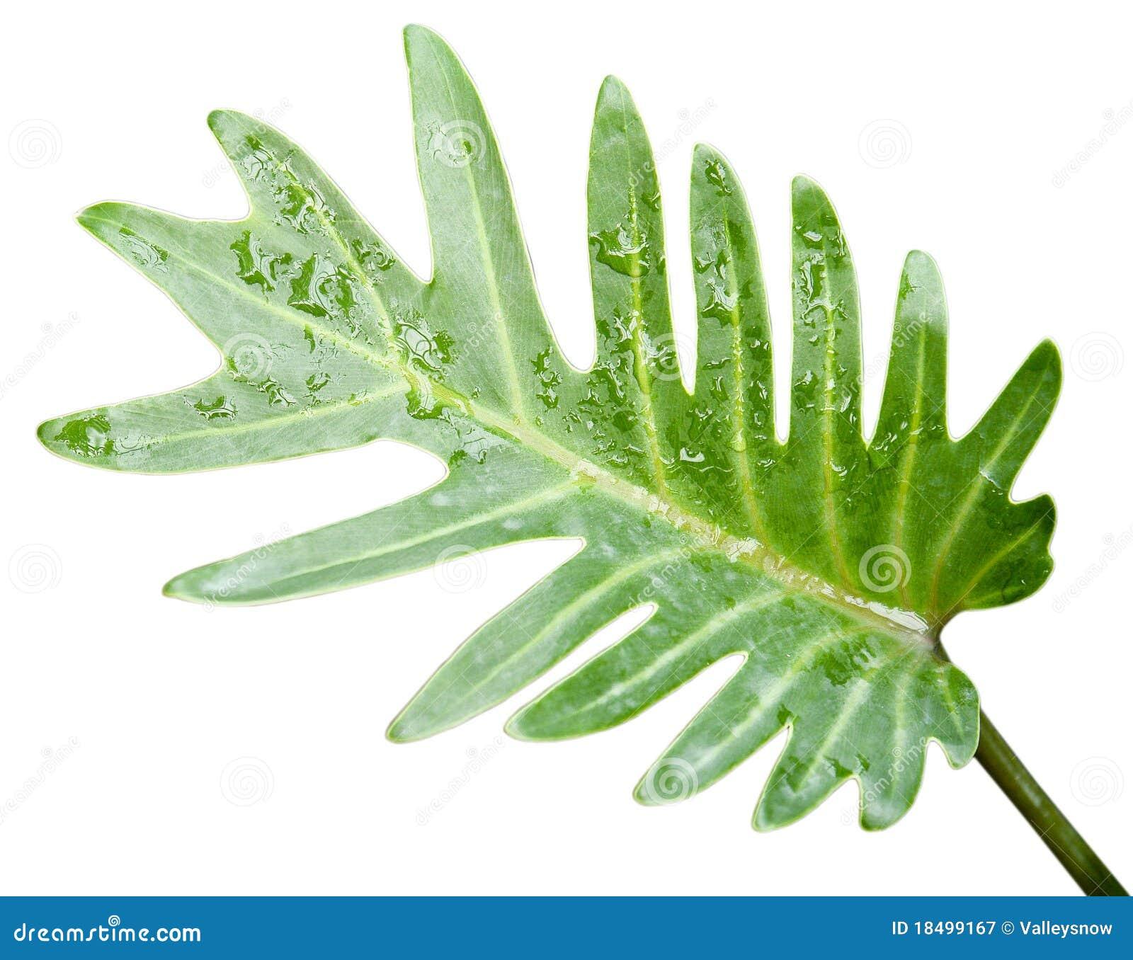 nest fern leaf isolated stock image image of morning