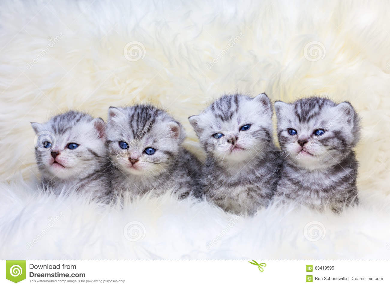 Nest with four young tabby cats in a row