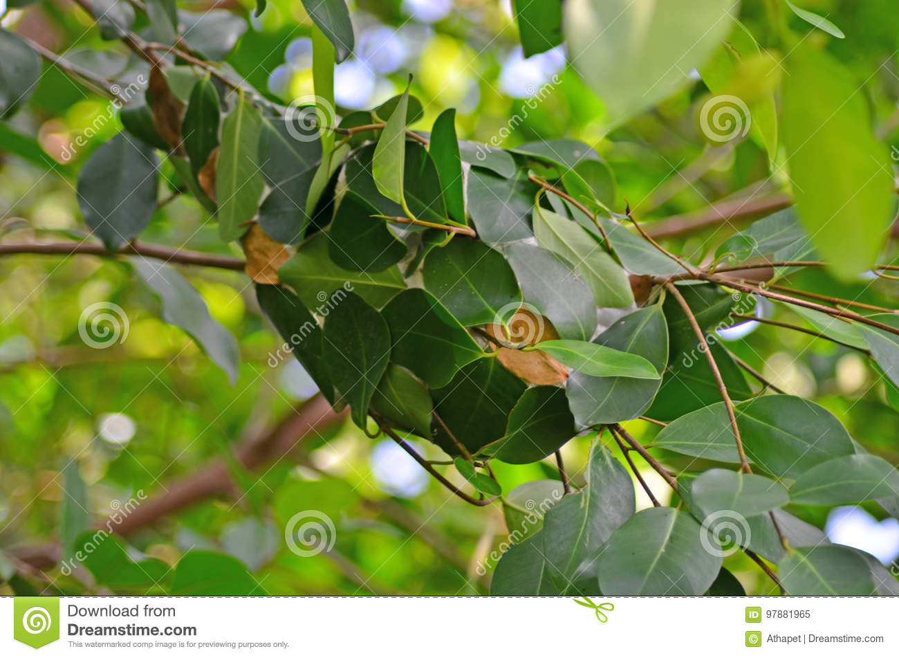 Download Nest of red ants stock image. Image of tree, building - 97881965