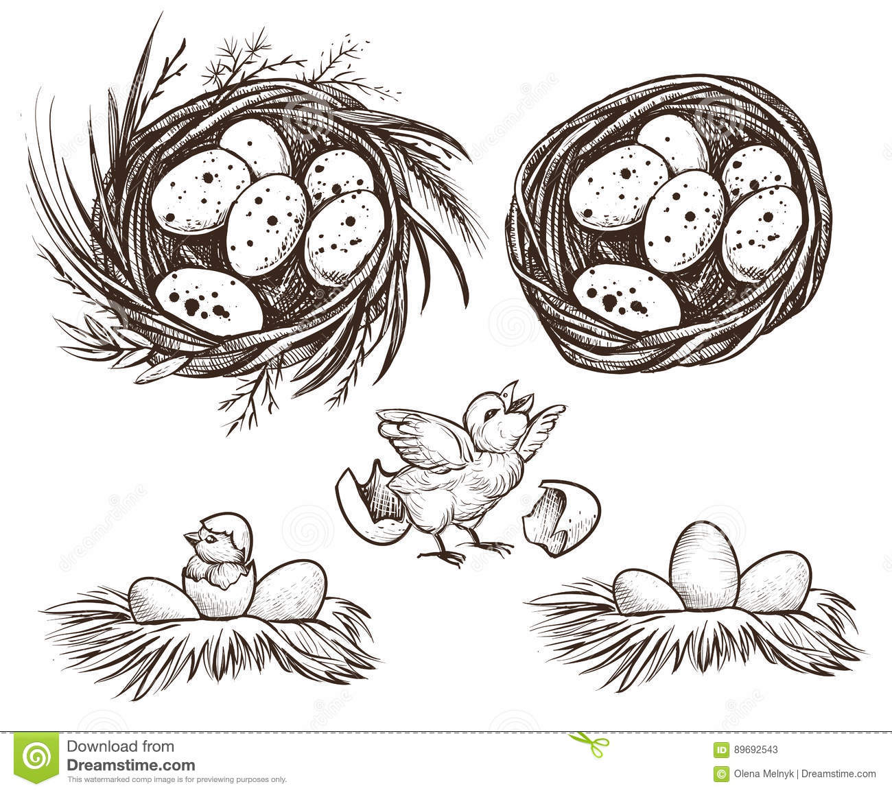 Line Drawing Nest : Hen on nest with hatching chicken and baby crocodi vector