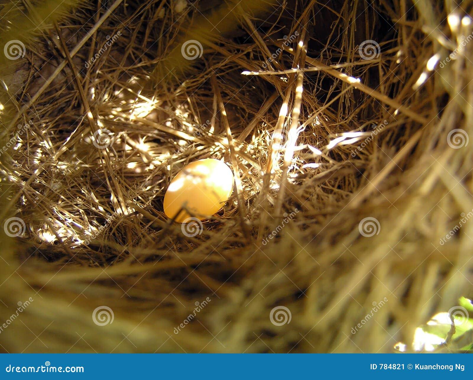 Nest und Ei