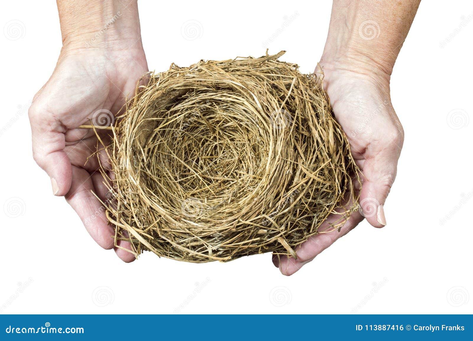 Nest in Vrouwen` s Handen die wordt gehouden