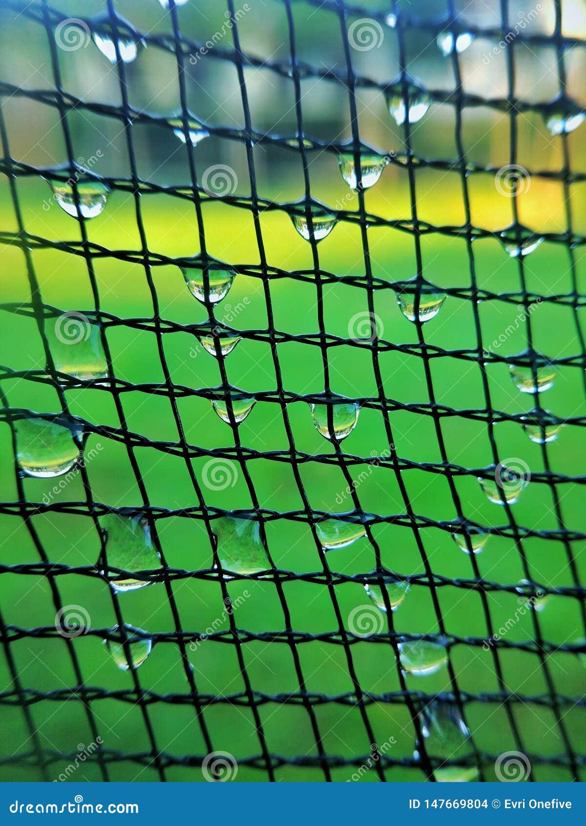 Net pattern with dew drop