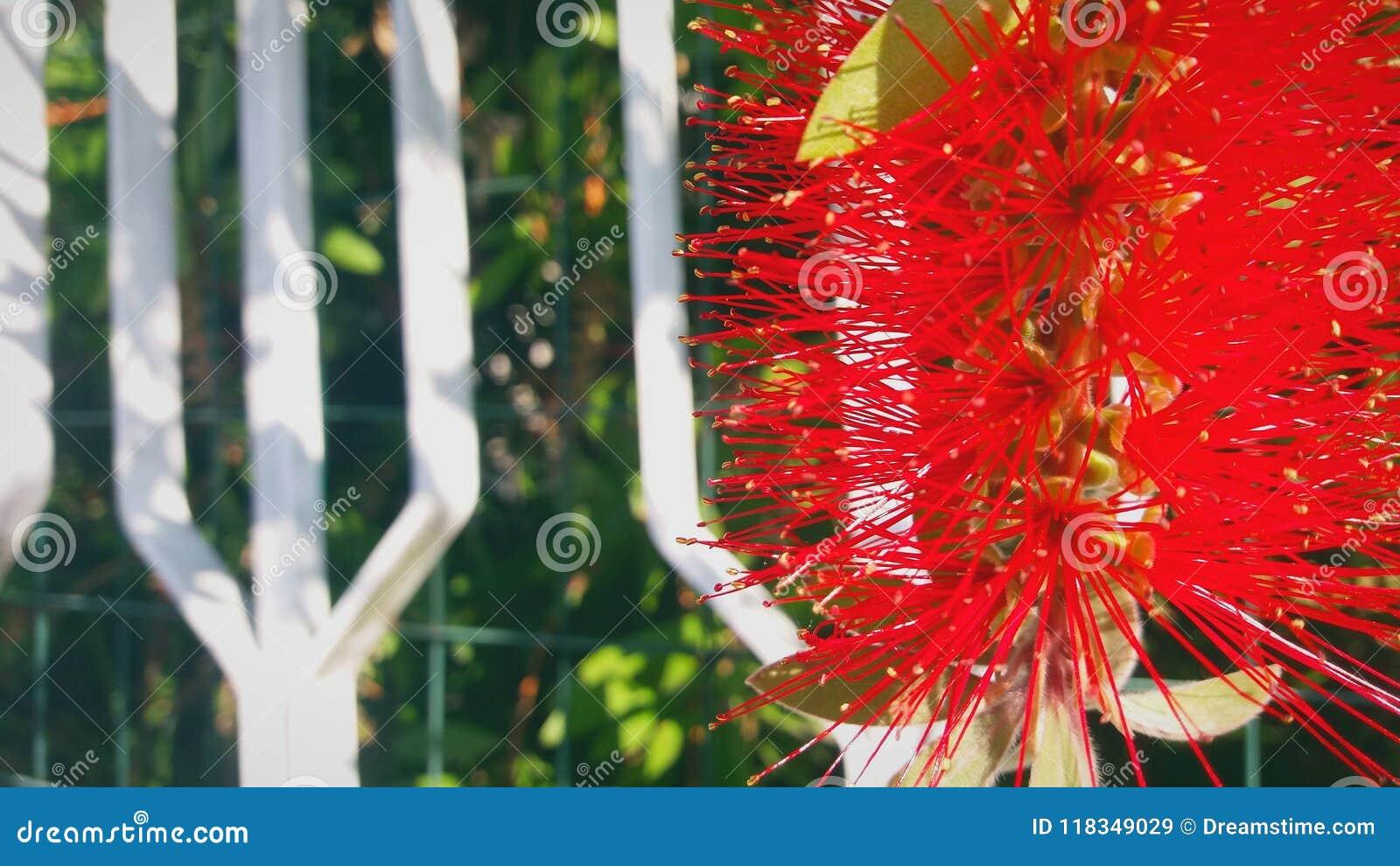 Netelige en vreemde rode bloem