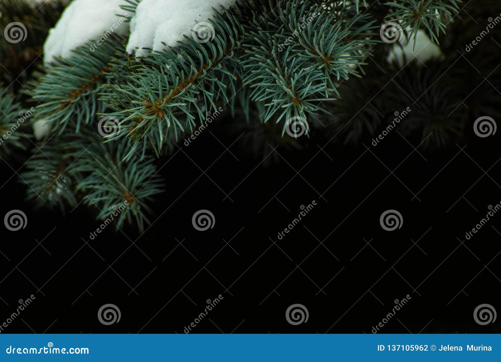Nette die takken met sneeuw worden behandeld