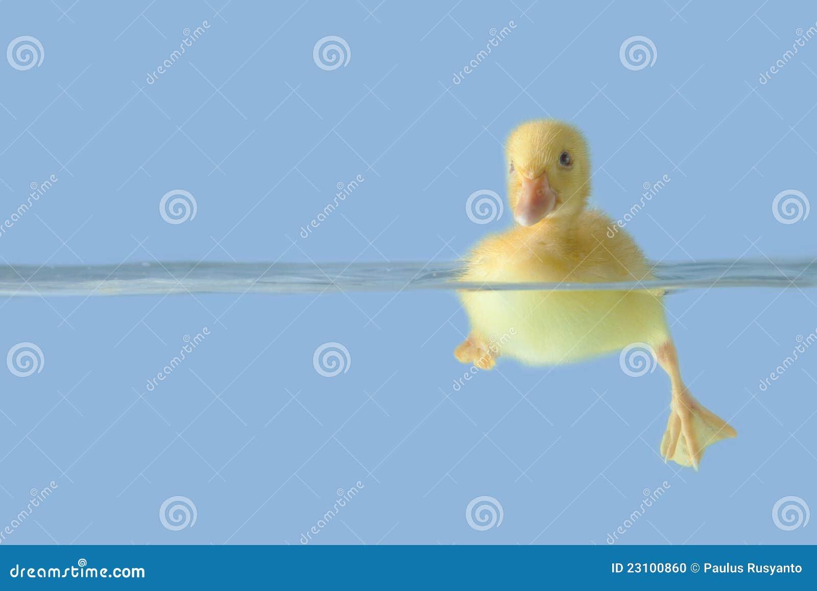Nette Ente auf dem Wasser über blauem Hintergrund