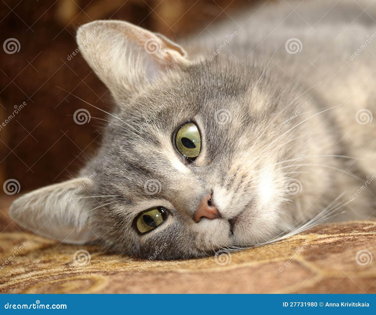 Nette graue gestreifte Katze