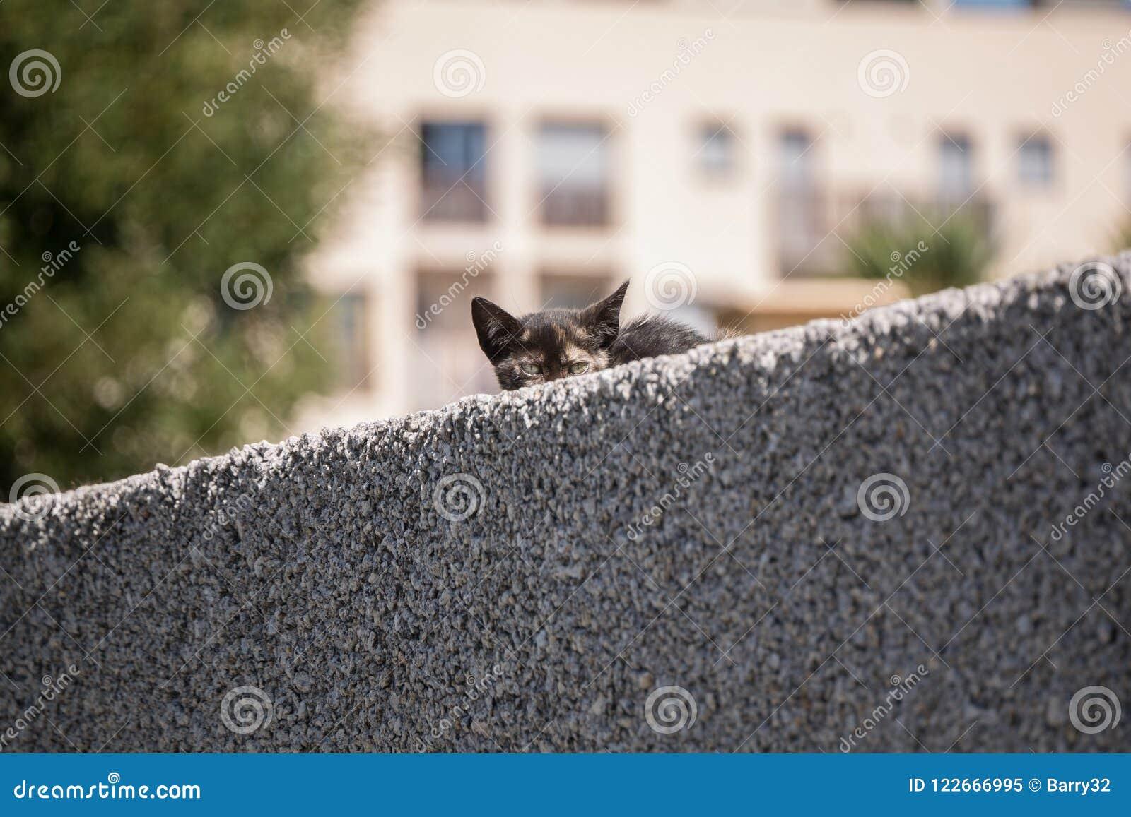 Nette junge Katze der getigerten Katze, die von hinten eine Wand späht