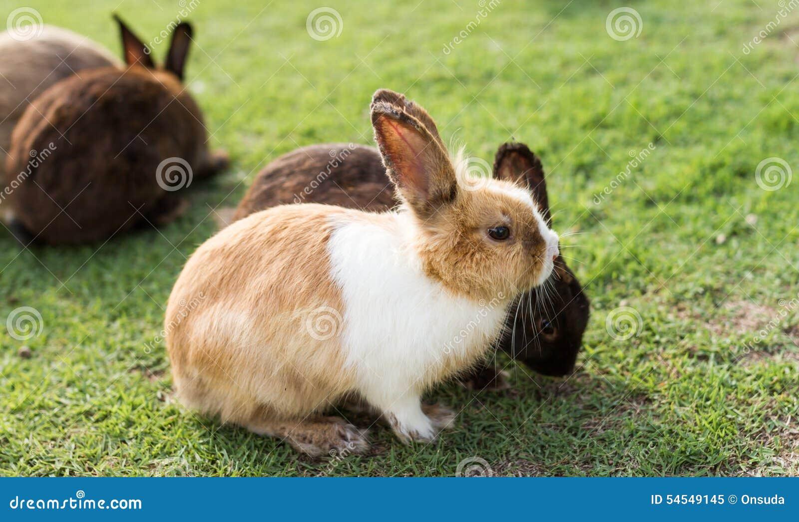 Nette Kaninchen Im Garten Stockbild Bild Von Essen Pelz 54549145