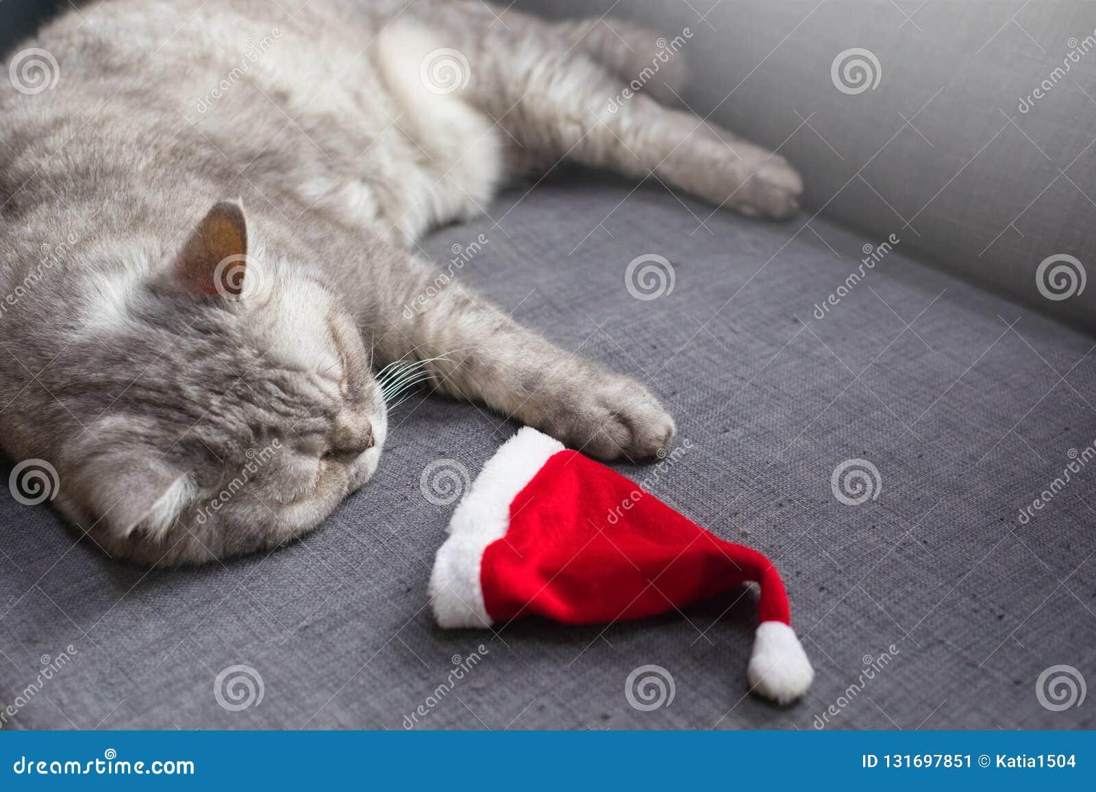 Nette Katze, die auf Sofa mit einer Sankt Hut, Weihnachts-afterparty Konzept stillsteht