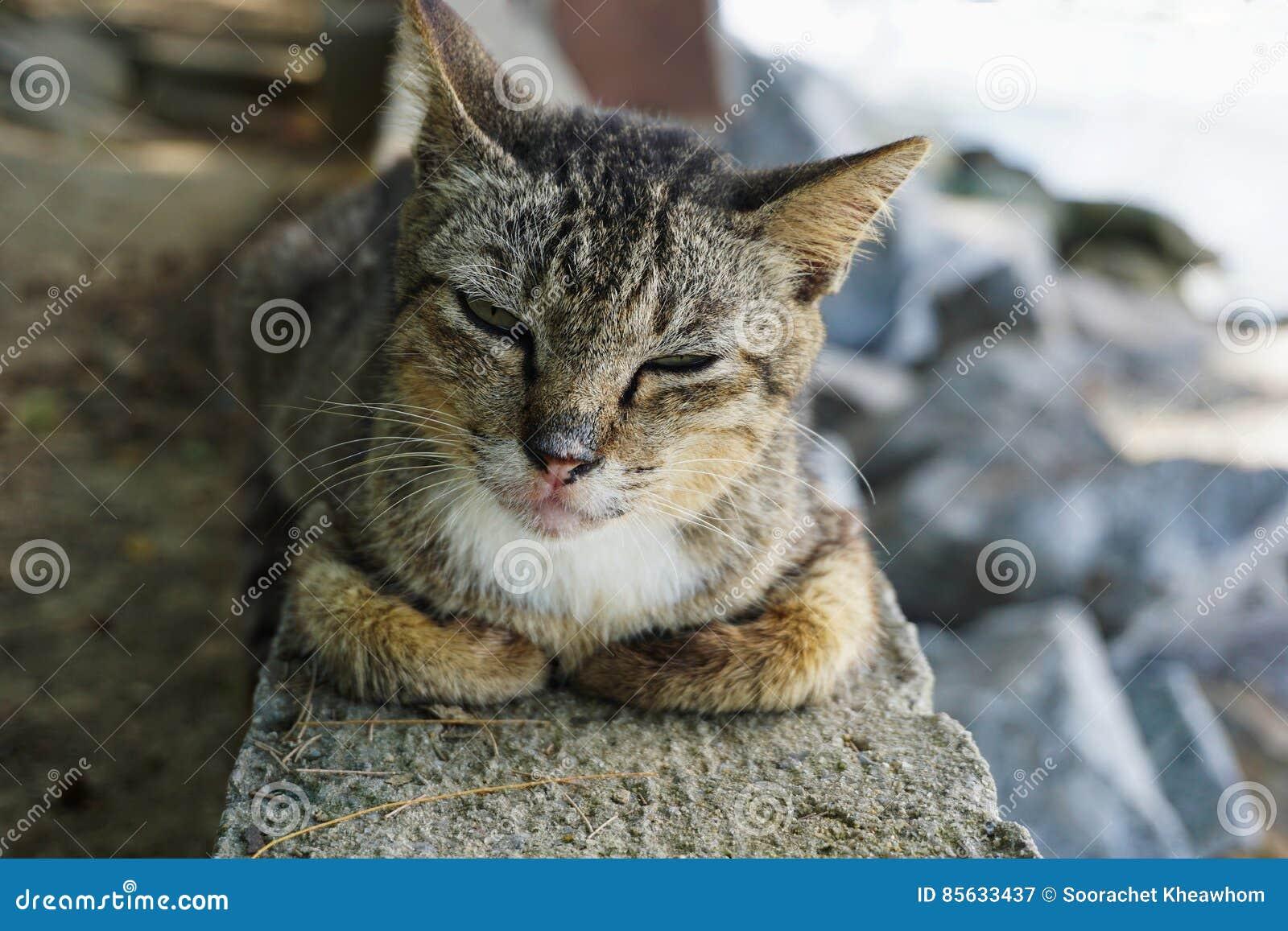 Nette Katze, die seine Lebensdauer genießt