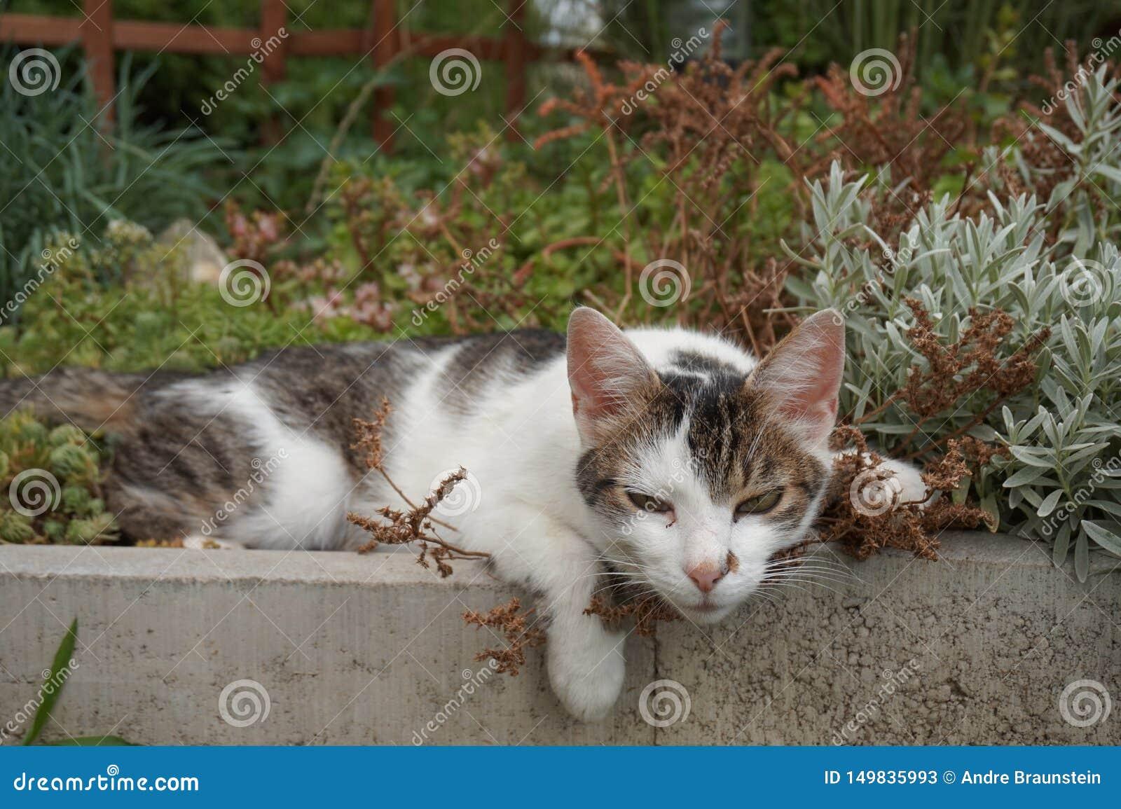 Nette Katze liegt in einem Blumenbeet und völlig entspannt