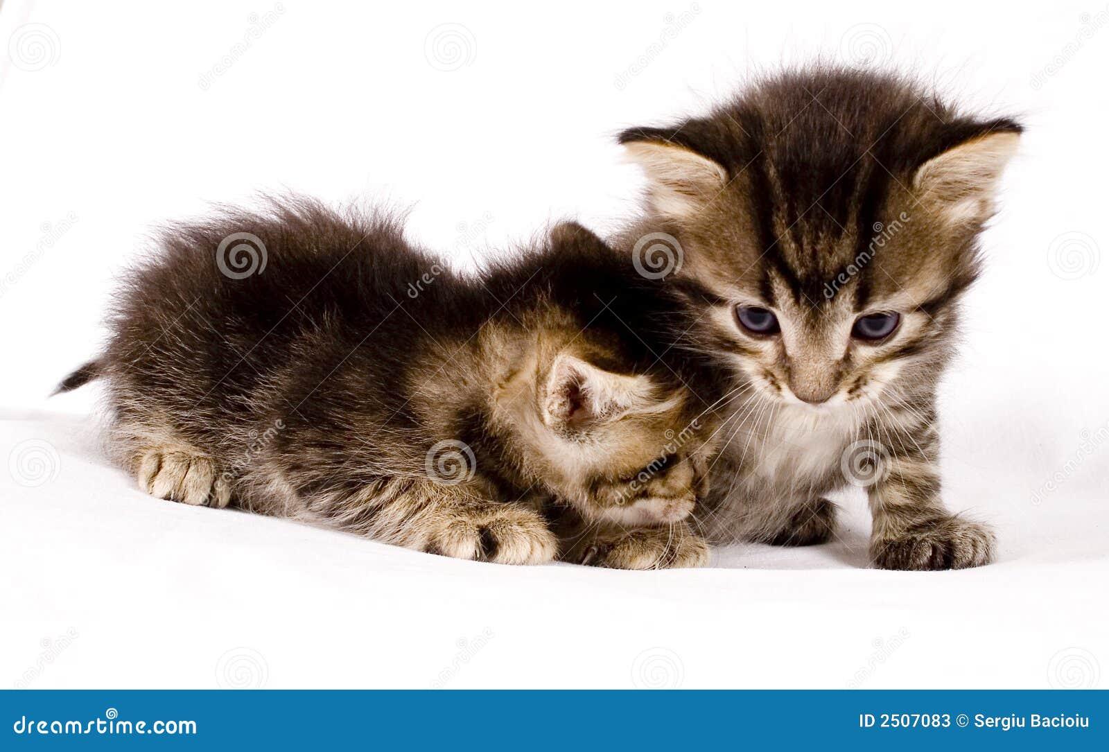 Nette Katzen