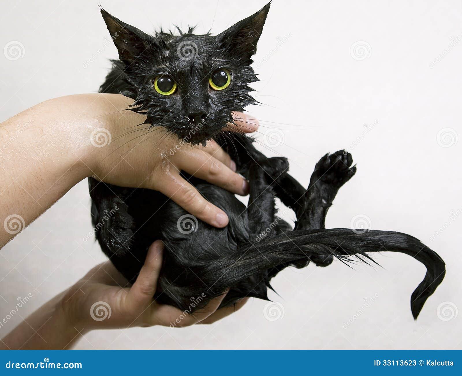 Flea Management Cats