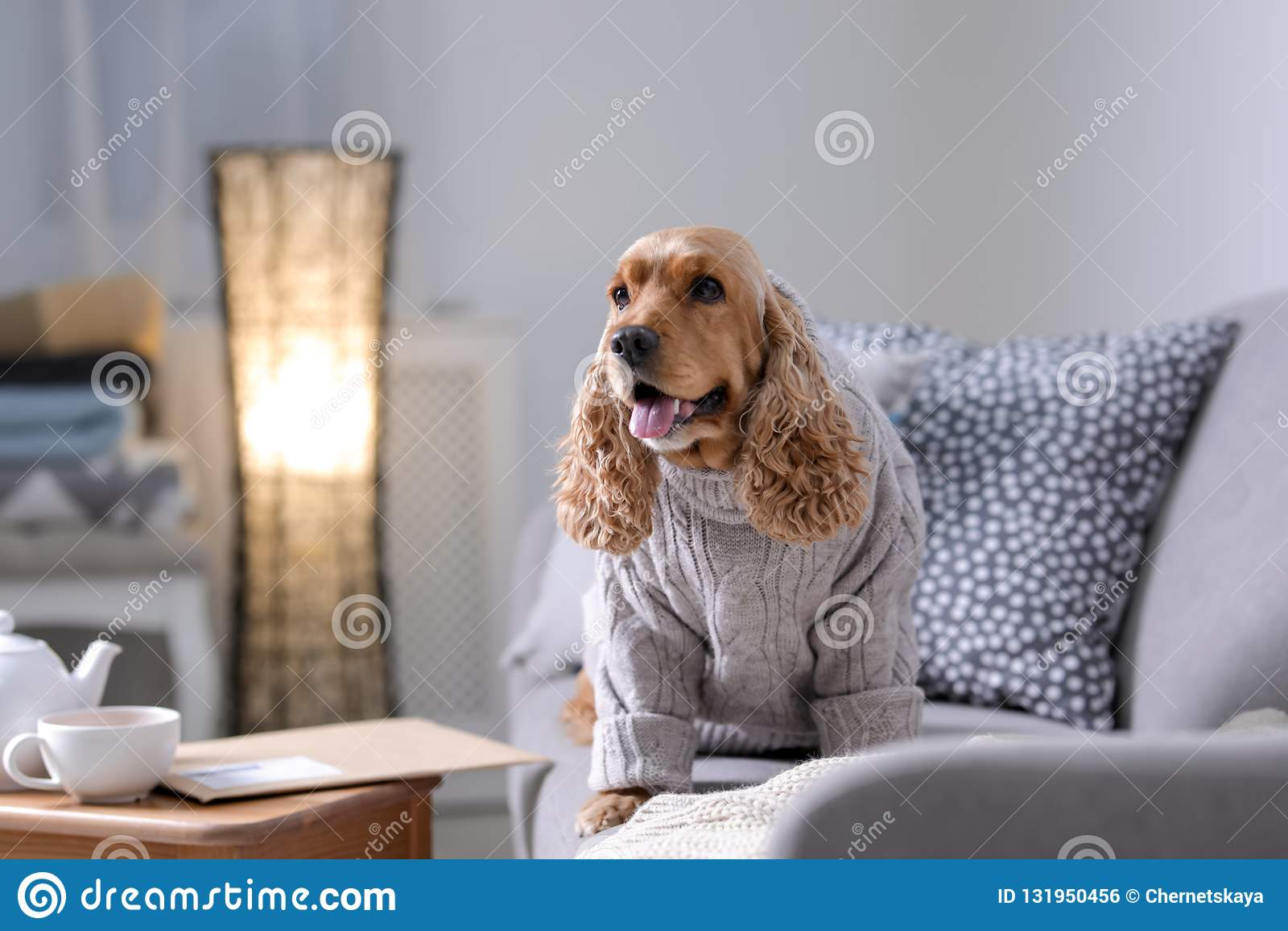 Netter Cocker Spaniel-Hund in gestrickter Strickjacke auf Sofa zu Hause