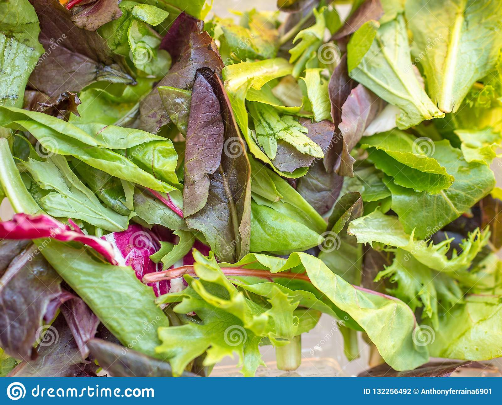Netter frischer Kopfsalat