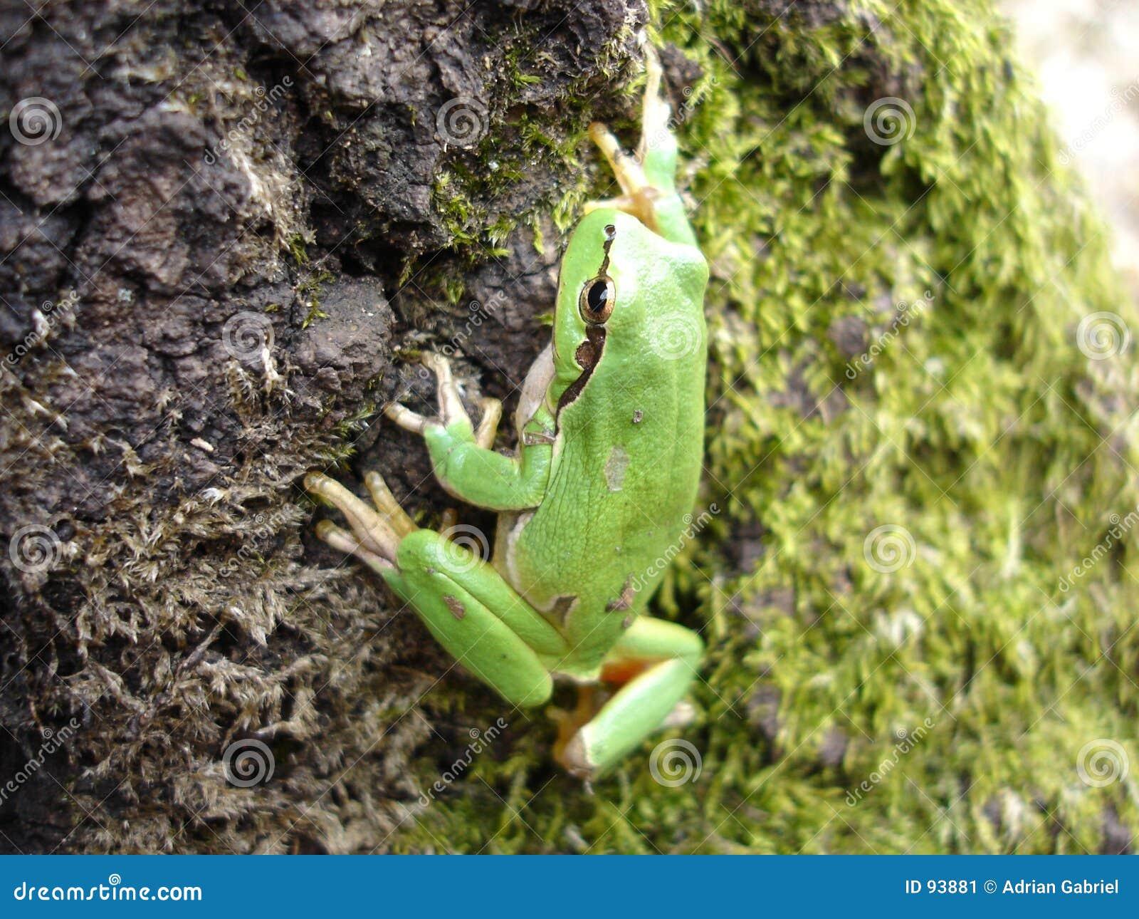 Netter Frosch