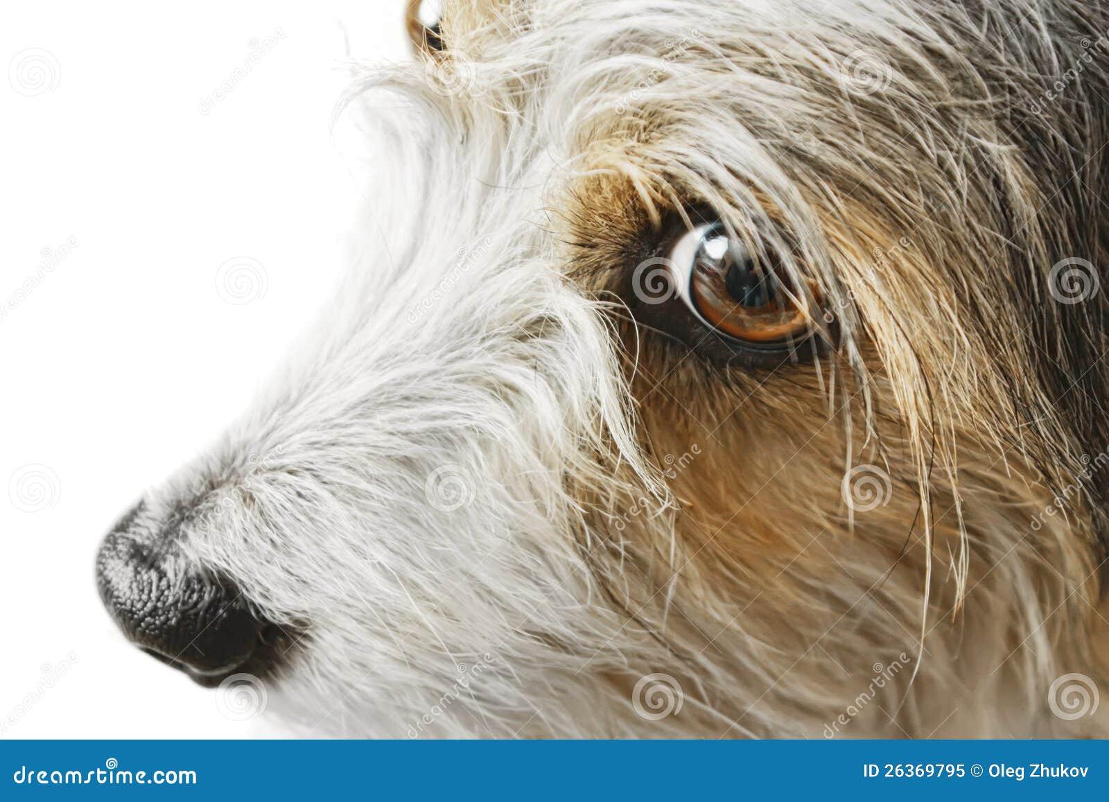 Netter Hund