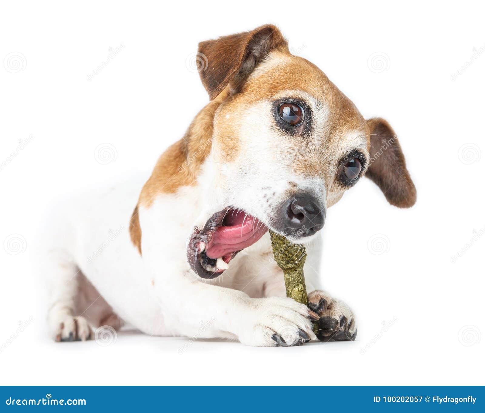 Netter Hund zerfressene Knochenfestlichkeit,