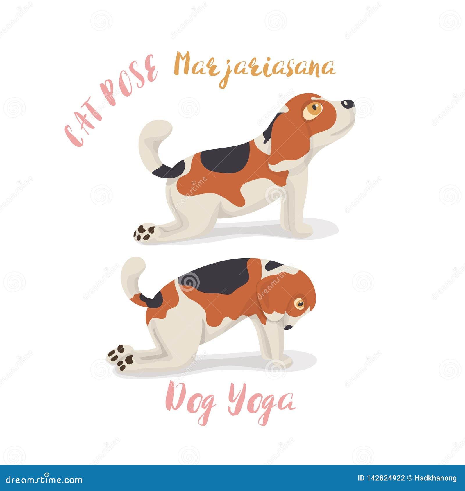 Netter Karikaturspürhundhund in der Yogahaltungsmeditation, eine Katzenhaltung, Marjaryasana