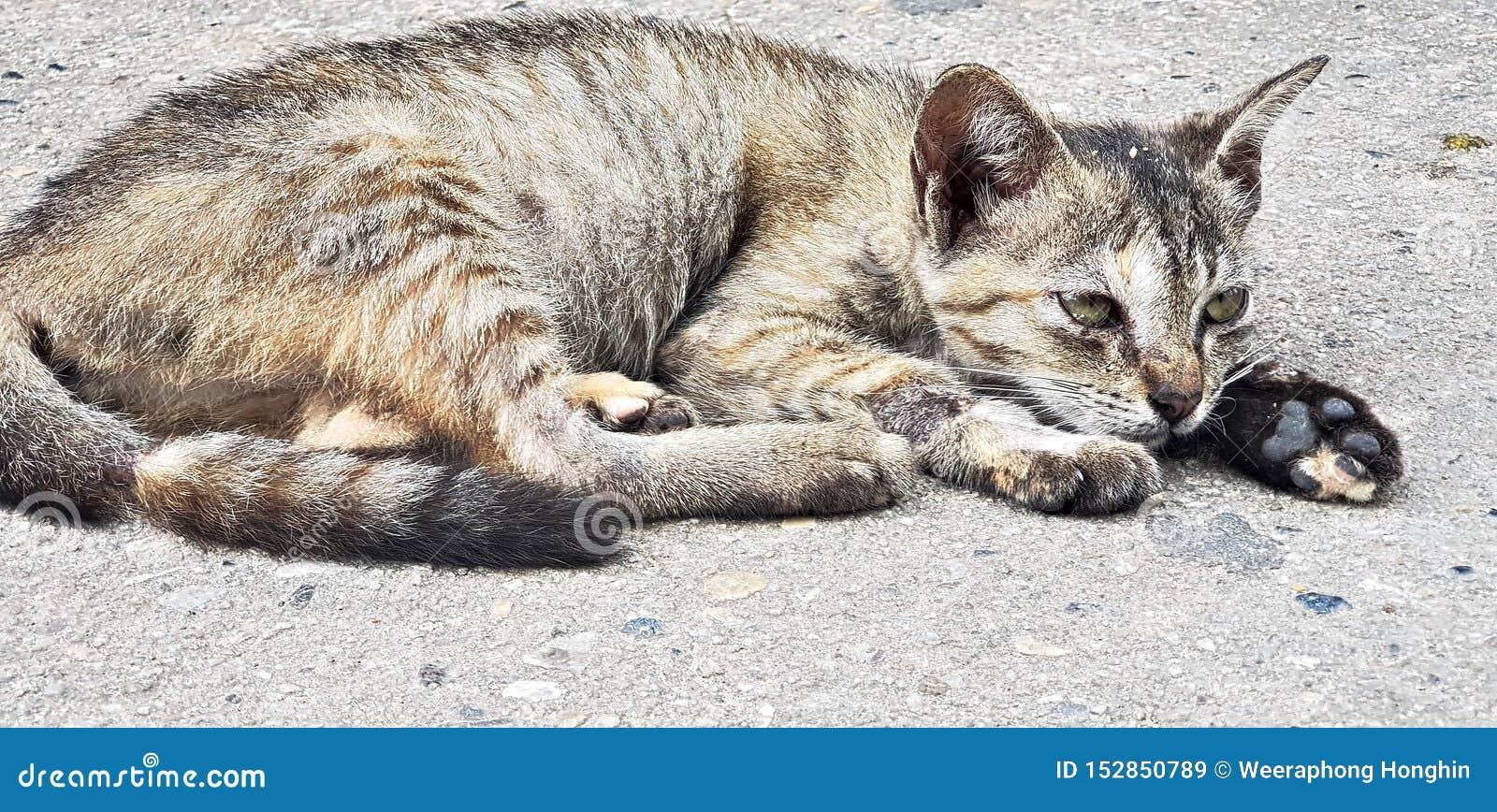 Netter Katzenrest auf Boden am sonnigen Tag
