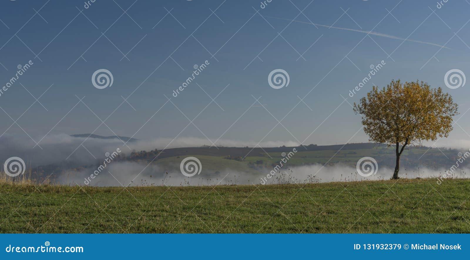 Netter Laubbaum mit blauem Himmel und Gegenteil im Tal