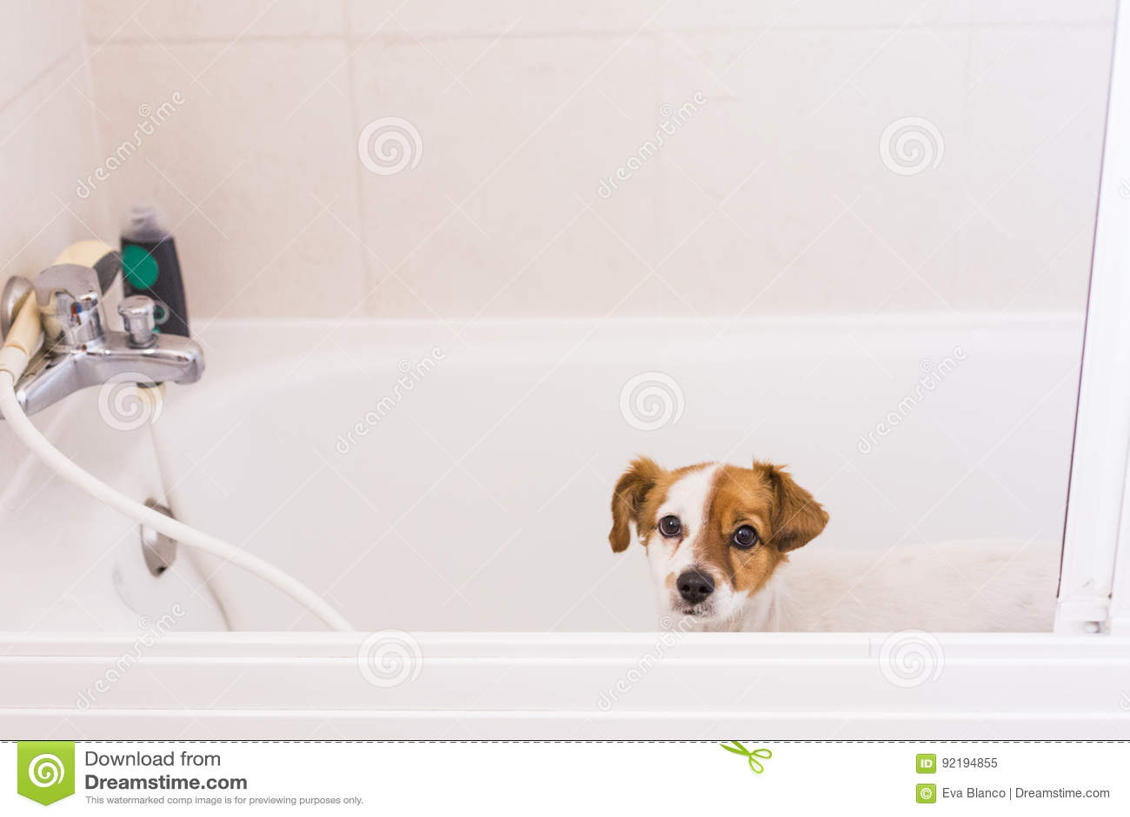 Netter Reizender Kleiner Hund Bereit Ein Bad In Der Badewanne Zu