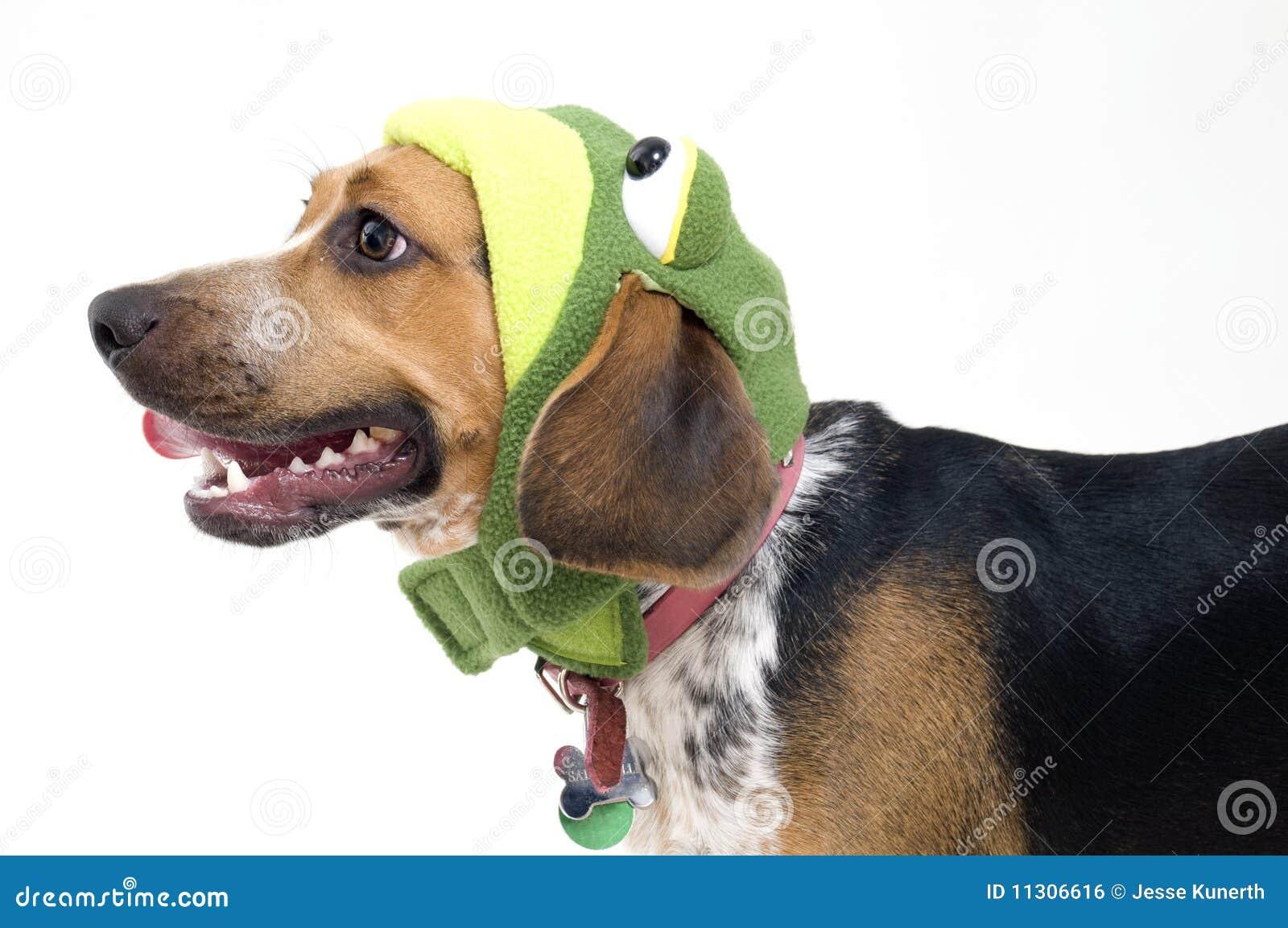 Netter Spürhund im Frosch-Kostüm
