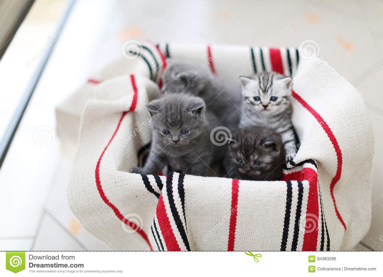 Nettes Gesicht, eben getragene Kätzchen