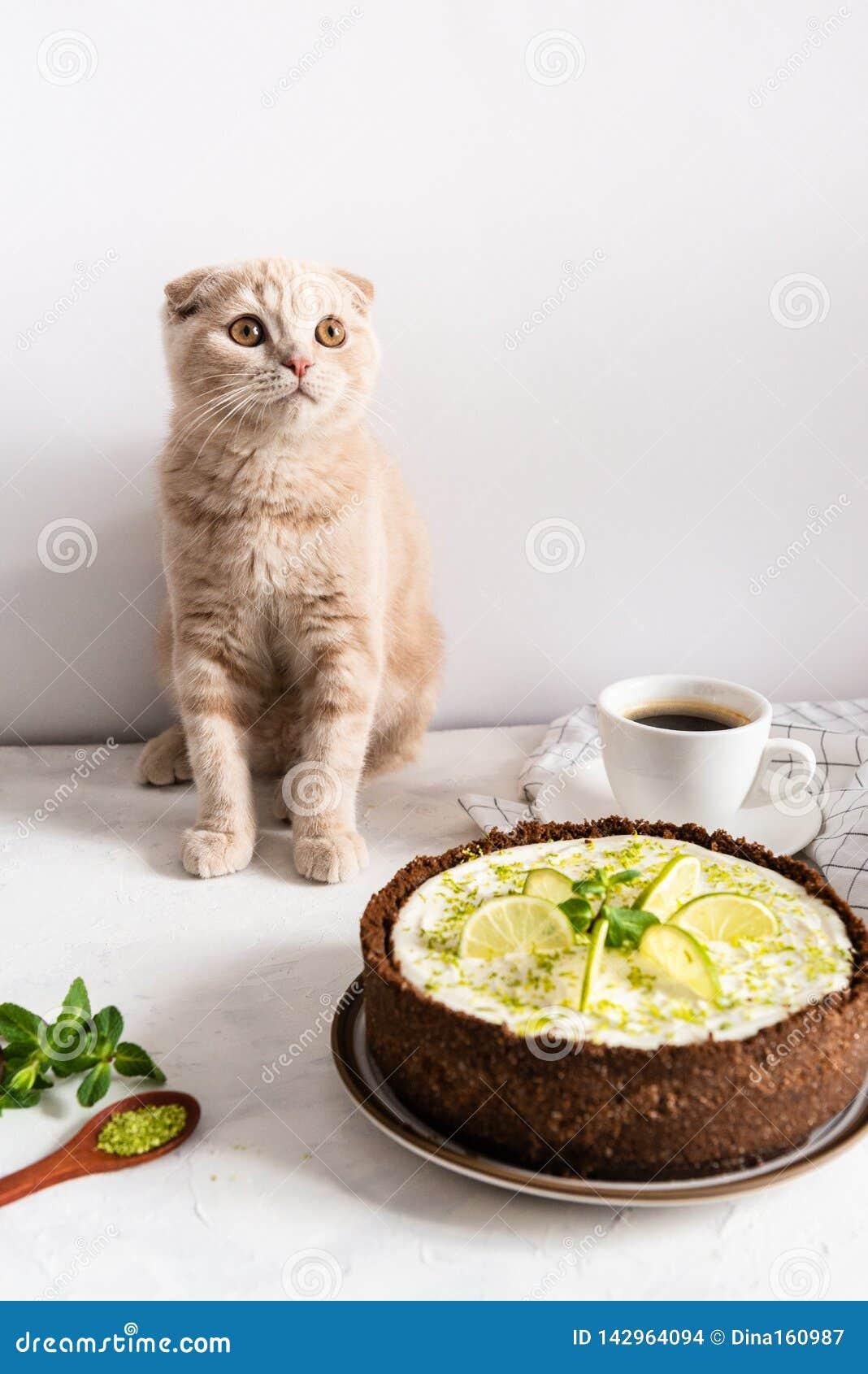 Nettes Kätzchen mit Käsekuchen Käsekuchen mit Kalk und Minze auf weißem Hintergrund Weicher Fokus Kaffeehaus, Süßigkeitenkonzept,